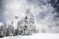 Magical Christmas Card With Fairy Tale Winter Landscape With Snow Covered Firs Stock Photo