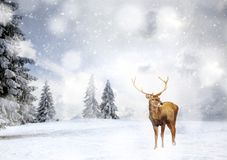 Magical Christmas Card With Oble Deermale In Fairy Tale Winter Landscape Stock Photography