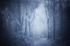 Magical Christmas forest with fog royalty free stock photography