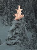 Magical Christmas tree with fairy tale light covered in deep snow. Winter holiday background royalty free stock photos