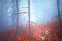 Magical colorful autumn forest landscape Stock Photography