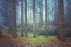 Magical colorful autumnal forest trees Royalty Free Stock Images