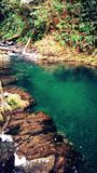 Magical Creek. A magical creek in British Columbia during the summer Royalty Free Stock Photos