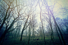 Magical dark and mysterious forest. Stock Photography