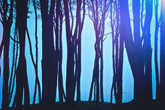 Magical dark and mysterious forest. Nature in the woods Royalty Free Stock Photo