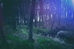 Magical dark and mysterious forest. Stock Photo