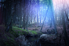 Magical dark and mysterious forest. Royalty Free Stock Image