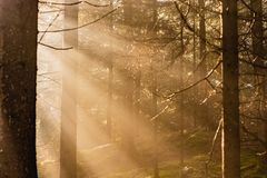 Magical Deep foggy Autumn Forest. Park. Beautiful Scene Misty Old Forest with Sun Rays, Shadows and Fog. Scenic Landscape royalty free stock image