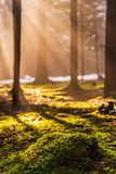 Magical Deep foggy Autumn Forest. Park. Beautiful Scene Misty Old Forest with Sun Rays, Shadows and Fog. Scenic Landscape royalty free stock photos