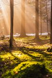 Magical Deep foggy Autumn Forest. Park. Beautiful Scene Misty Old Forest with Sun Rays, Shadows and Fog. Scenic Landscape stock images