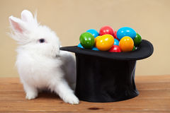 Magical easter with rabbit and colorful eggs Stock Photos