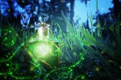 Magical fairy dust potion in bottle in the forest. Magical fairy dust potion in bottle in the forest stock image