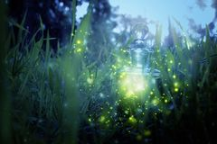 Magical fairy dust potion in bottle in the forest. Magical fairy dust potion in bottle in the forest royalty free stock image