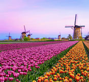Magical fairy fascinating landscape with windmills middle tulip Royalty Free Stock Photography