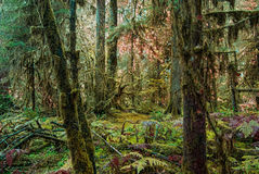 A Magical Fairytale Forest. A mossy damp forest looks like fairys live there royalty free stock image