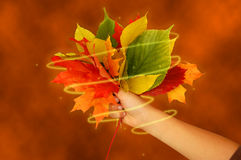 Magical fall bouquet Stock Photos
