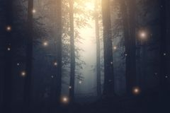 Magical fantasy fairy lights in enchanted forest with fog