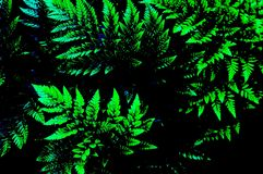 Magical Fern Fronds Royalty Free Stock Photos