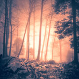 Magical fire red colored foggy forest tree landscape Royalty Free Stock Images
