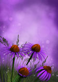 Magical flower background Stock Photography