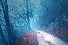 Magical foggy cyan blue light forest road Royalty Free Stock Images