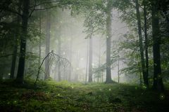 Magical foggy fairytale forest. Magical green colored foggy fairytale forest landscape with fireflies royalty free stock photo