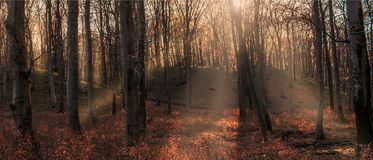 Legendary forest at late autumn stock photography