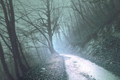 Magical foggy olive green light forest road Stock Photos