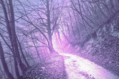 Magical foggy serenity pantone color light forest Royalty Free Stock Image