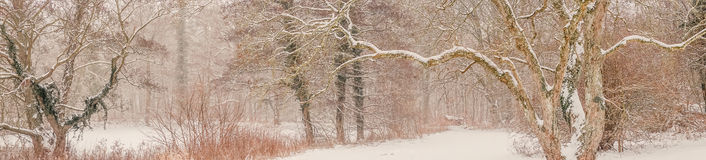 Magical forest covered with snow in the winter Stock Image