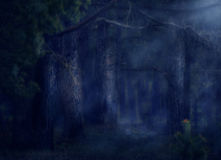 Magical Forest Stock Photography