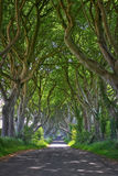 Magical forest of Dark Hedges Stock Photos