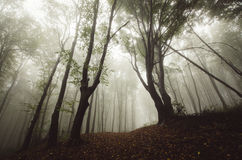 Magical forest with fog Stock Photography