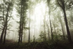 Magical forest with fog and light Royalty Free Stock Images