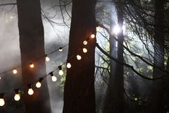 Magical forest and funfair lights. A magical misty woodland is illuminated by strings of funfair lights stock images