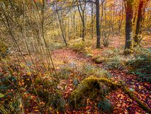 Magical forest glade with autumn golds, browns and yellows Royalty Free Stock Photography