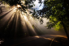 Magical forest with light rays. Magical forest in the morning with sunlight rays through the wood and curve street Stock Photography