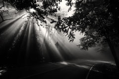 Magical forest with light rays. Magical forest in the morning with sunlight rays through the wood and curve street, black and white  process Stock Photo