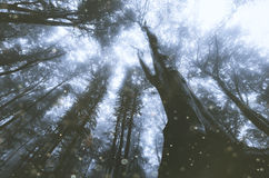 Magical forest Stock Photo