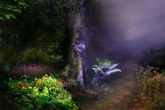 Magical Forest night Stock Photography