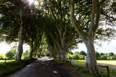 Magical forest, Northern Ireland Royalty Free Stock Images