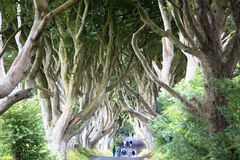 Magical forest, Northern Ireland Royalty Free Stock Photography