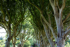 Magical forest, Northern Ireland Stock Photos