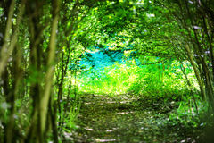 Magical forest with path to the light. Through dark tunnel of trees royalty free stock photography