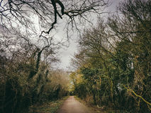 Magical forest pathway. Trees route path sky centerpath branches spiritual magic forest natural nature Stock Photos