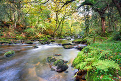 Magical Forest River Stock Photography