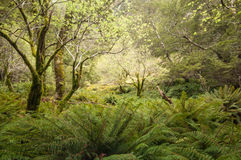 Magical forest at Routeburn Track, New Zealand Royalty Free Stock Images