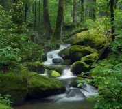 Magical forest stream Stock Photography