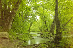 Magical Forest Swamp Stock Photography