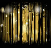 The magical forest Royalty Free Stock Photography
